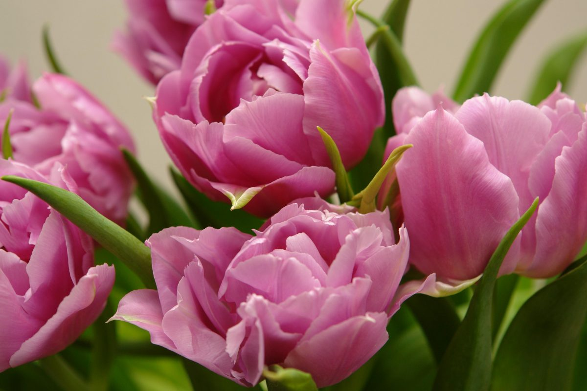 Ladies' Sodality Mother's Day